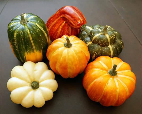 Assorted Pumpkin & Squash #1