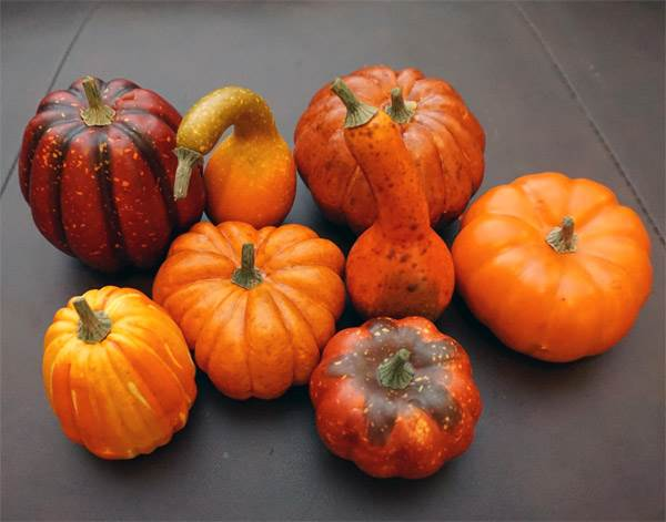 Assorted Pumpkin & Squash #2