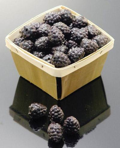 Basket (Blueberry)