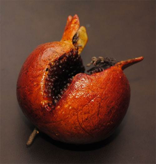 Pomegranate (Split)