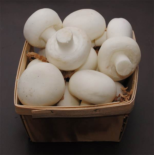 Basket (Mushrooms)