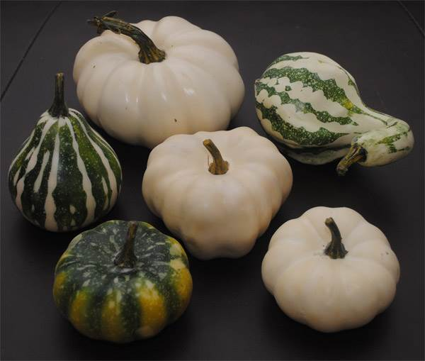 Pumpkin & Squash Assortment #2